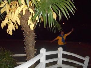 Les palmiers de pau